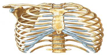 Plyusnevaya kemiği - yapının özellikleri 5